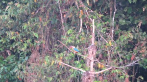 Indulge me please. That is a Kingfisher.