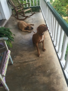 Elsa and Meatball on my verandah.